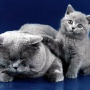 cats_0003